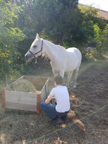Zeit geben, Zeit lassen, Dinge einfach entstehen lassen, so wie es auch in der Natur geschieht, und wie es Mensch und Pferd gut tut.
