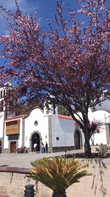 Teneriffa Wanderurlaub und die Kirchen von Santiago del Teide zur Blütezeit