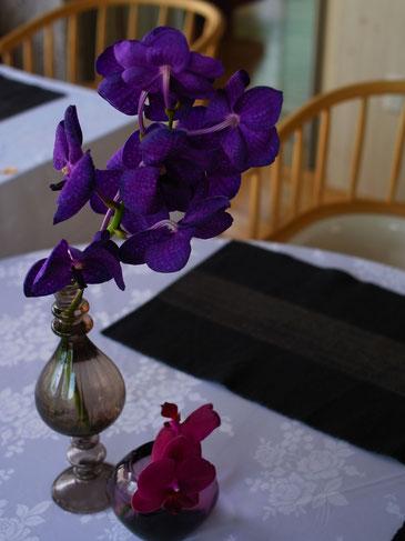 青紫色のバンダ