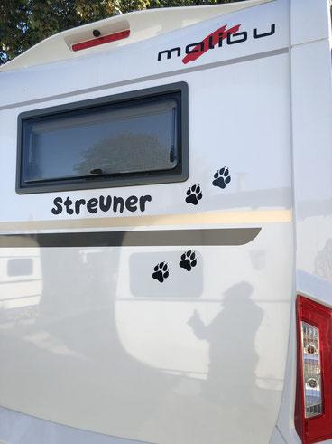 "Der ""Streuner"" bekam im Sept. 2019 Tatzen"