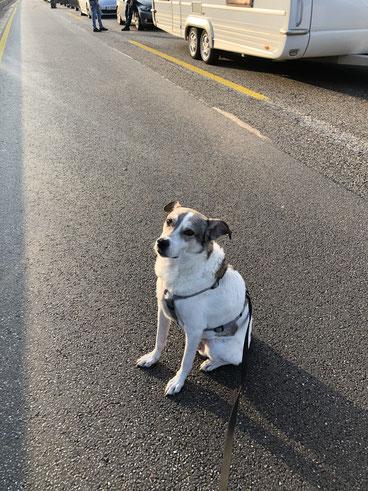 Stitch auf der Autobahn am 23.03.2019, im Hintergrund der Wohnwagen