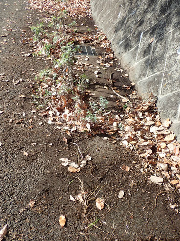 落葉で土づくりの自然栽培@すどう農園