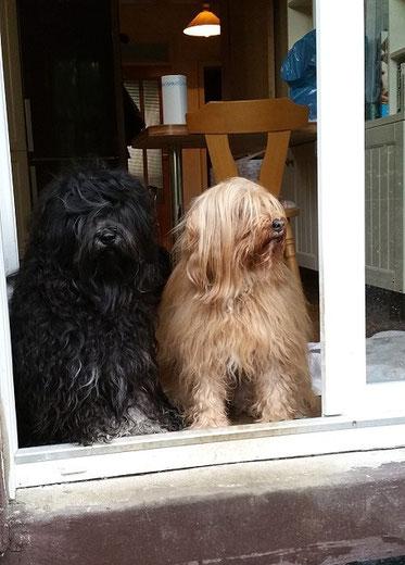Yeshi und Bya-ra an der Terrassentüre