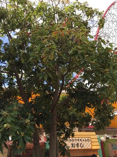 植木は全てコンテナに植わっているので、子供達が登ったりする心配も無い。
