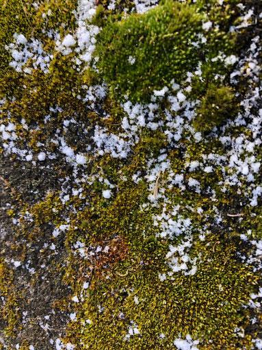 ちょっぴり雪が残ってました。