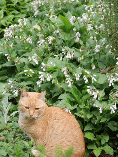 フクが見回りをしないのでお隣のレモン?メロン?が庭でじっとしています。