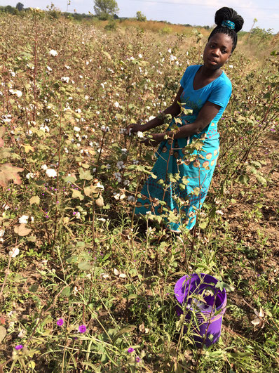 Cotton farmer in Mozambique (CHA, 2018)