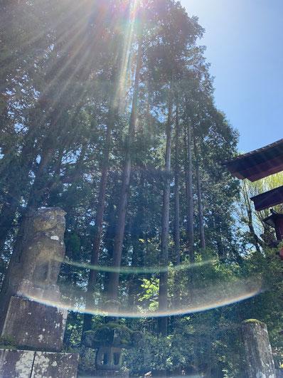 光のオーブ 狛犬 富士浅間神社