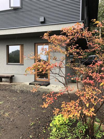 事務所ドア前のナツハゼの木がいちはやくきれいに紅葉。実は食用になるらしいけれど鳥には不人気の模様。