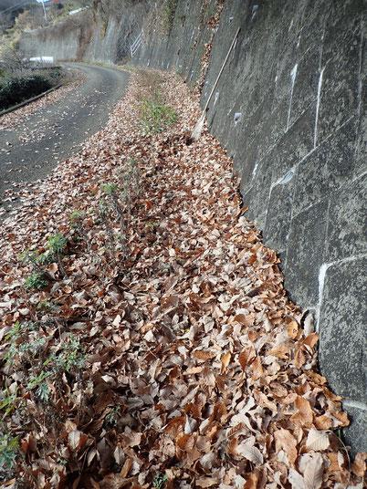落葉の土づくり 自然栽培 農業体験 神奈川