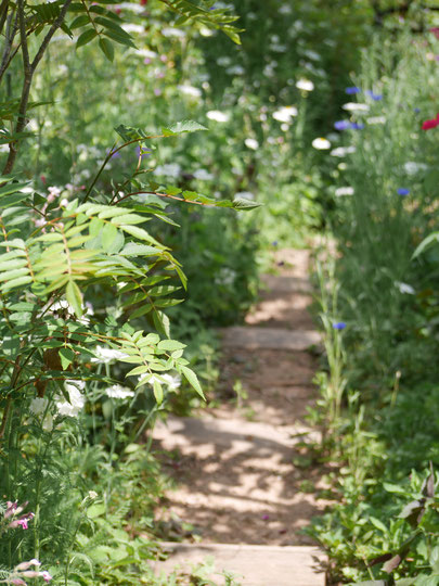 こんな小花の道も・・とても暑い日の午後だったのですが、不思議なことに植物がいきいき。もっと涼しい日だったらどうなんでしょう。それはそれは素晴らしいのでしょうね。
