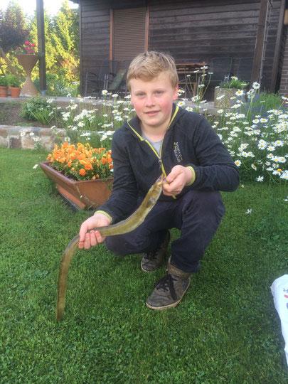 03.06.2016 Niclas Bernd / Morgnesternteich / Aal,  71 cm, 1 Pfund, auf Köfi