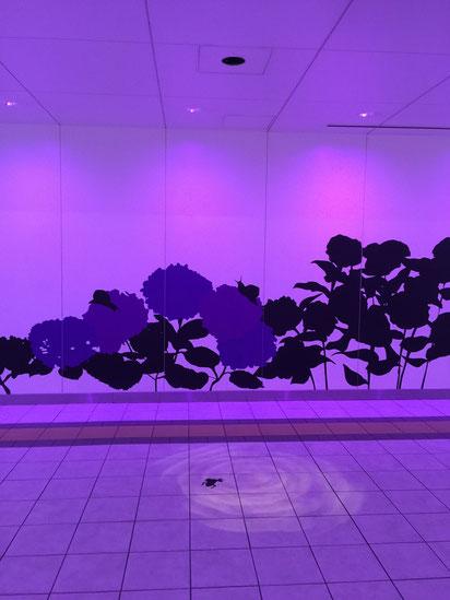 紫色のゾーン。ここは砂漠からかわったオアシス?