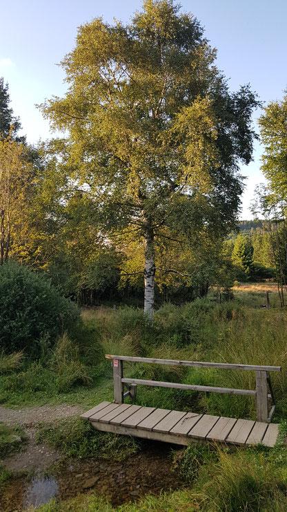 hoppecke, quelle, sauerland, hochheide, niedersfeld, wandern, wanderung, hiking, wanderroute, karte, tipps, infos, aussicht