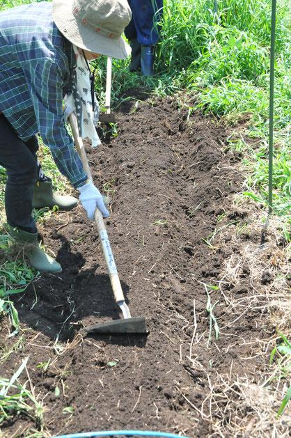 自然栽培 不耕起栽培 農業体験