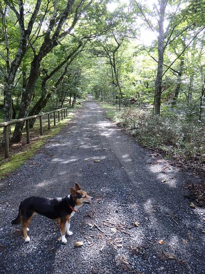 サンディ、散歩できる距離も日に日に短くなっていったね。この時こんなに遠くに歩けてたんだね、無理させてたかな・・・