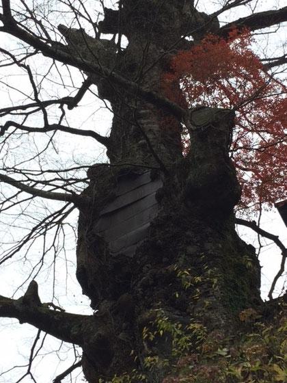 崖の上の千年欅 w/バール