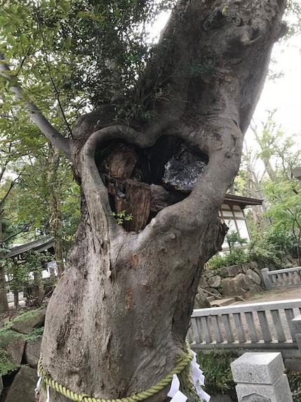 樹齢700年の大欅・ラブ注入。