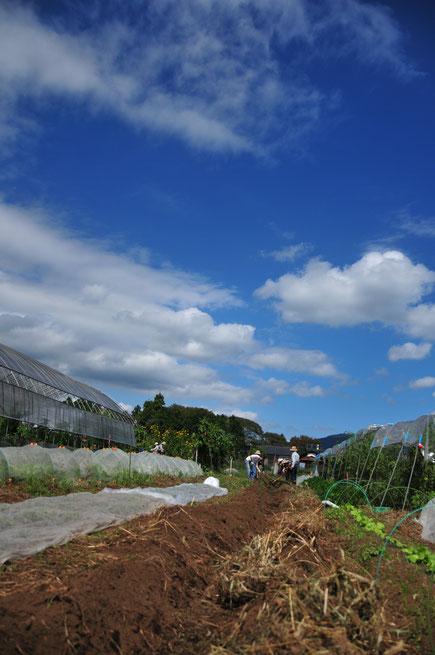 来年に備える地ごしらえの作業@さとやま農学校・すどう農園