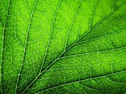 Pince à Chorophylle pour détecter la santé des plantes - avec Agralis, Aquitaine