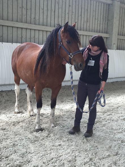 Körperarbeit mit Pferden