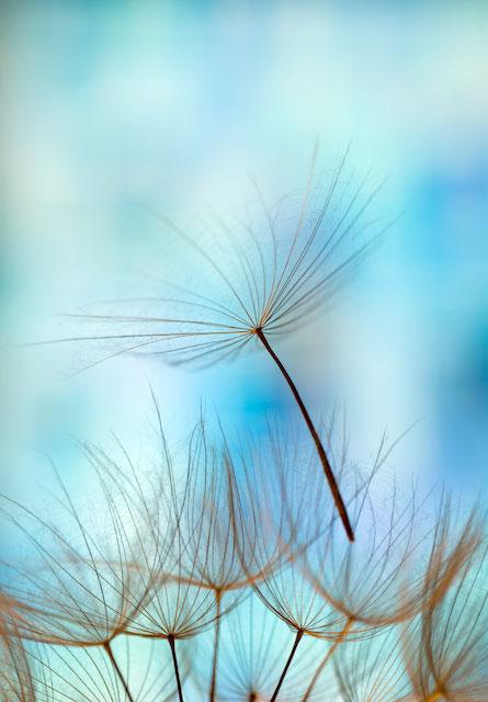 Hol dir deinen Glücksstern - Affirmationen - Sabine Fels