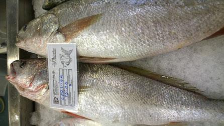 Adlerfisch,Corvina,Fisch,Peixe,Fish,Martiuns-Kulinarium,Algarve,Portugal