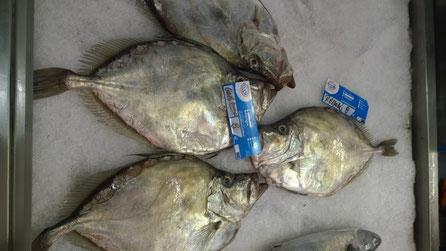 Petersfisch,Peixe Galo,John Dory,Fisch,Peixe,Fish,Martins-Kulinarium,Algarve,Portugal
