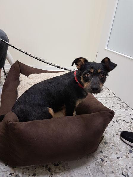 kleiner Hund im Hundebettchen