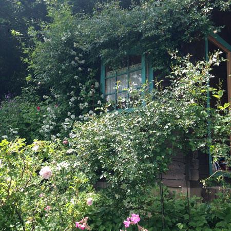上段の庭の小屋の窓にノイバラが・・・素敵なシーンです。