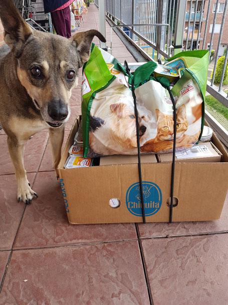 großer Hund neben einem Karton mit Tierfutter