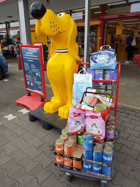 gelber Hund vom Futterhaus und Einkaufswagen mit Futterspendens