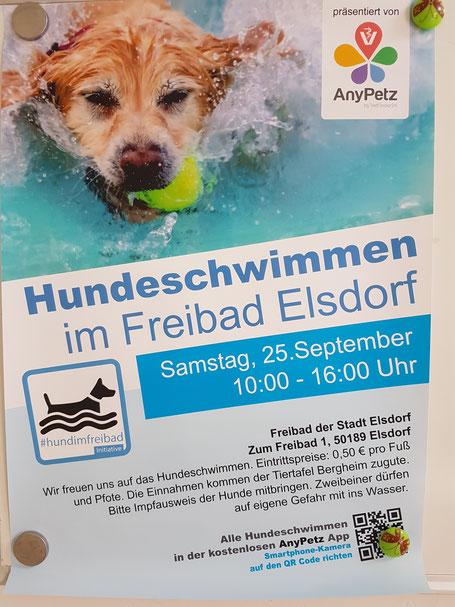 Plakat Hundeschwimmen Elsdorf