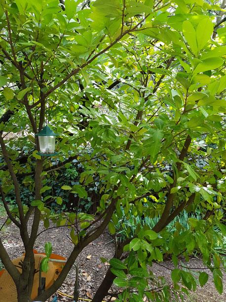 Grüne Büsche mit Vogelhäuschen