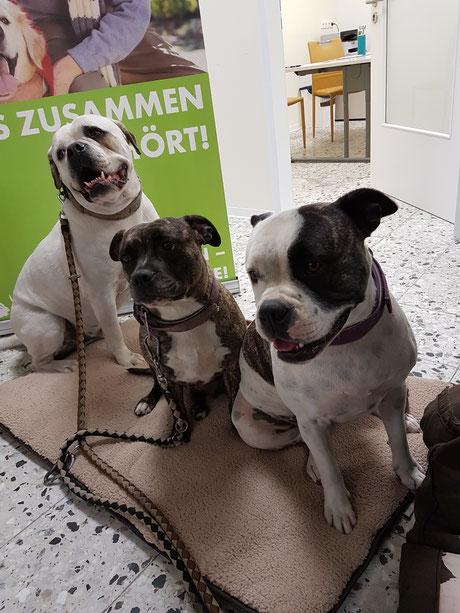 ein liebenswertes Trio, Foto: Oetken