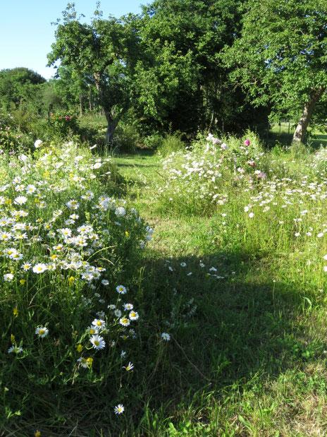 Eine Naturgarten-Rosenschule