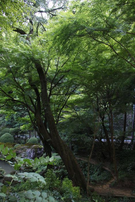 内々神社 CanonEOS8000D Sigma18-300mmF3.5-6.3 photo : toshimasa