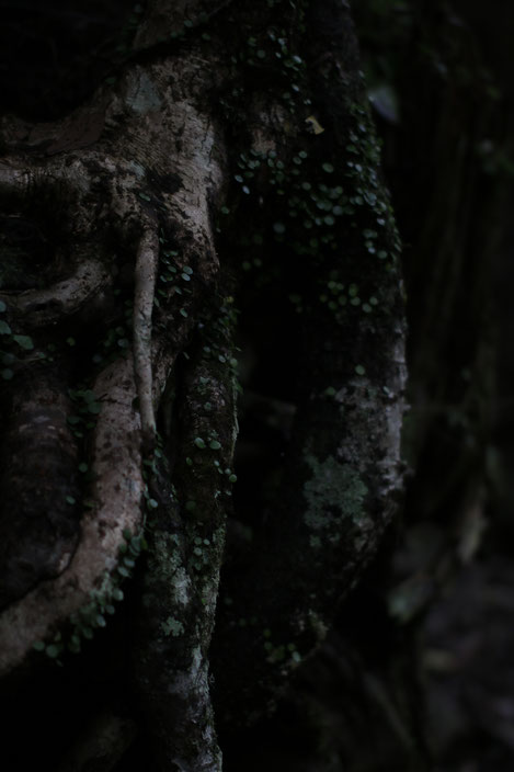 くらがり渓谷 CanonEOS8000D Sigma50mmF1.4EX ISO100 50mm F1.4 1/400 Tv photo : toshimasa