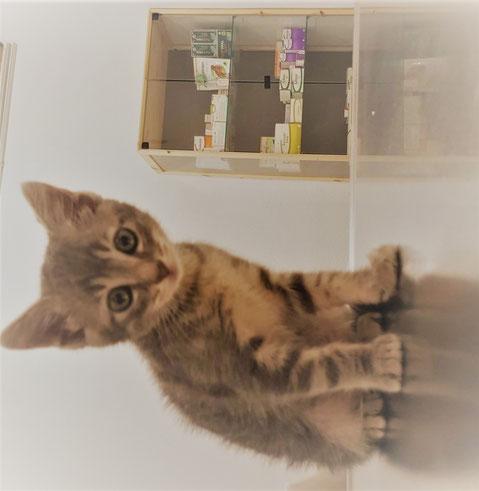 Vacunación desparasitación e Identificación mascotas