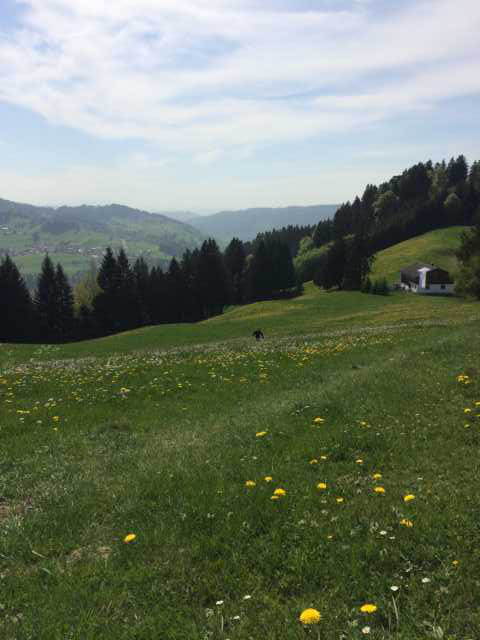 Wandern auf dem Feld mit Blumen