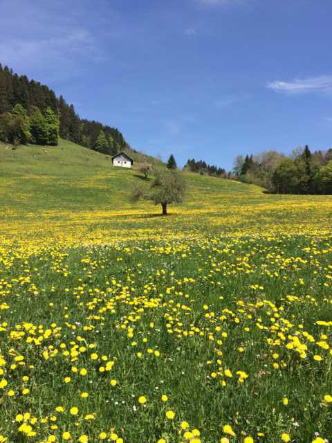 Blumenwiese Laufen im Grünen Wandern in der Natur