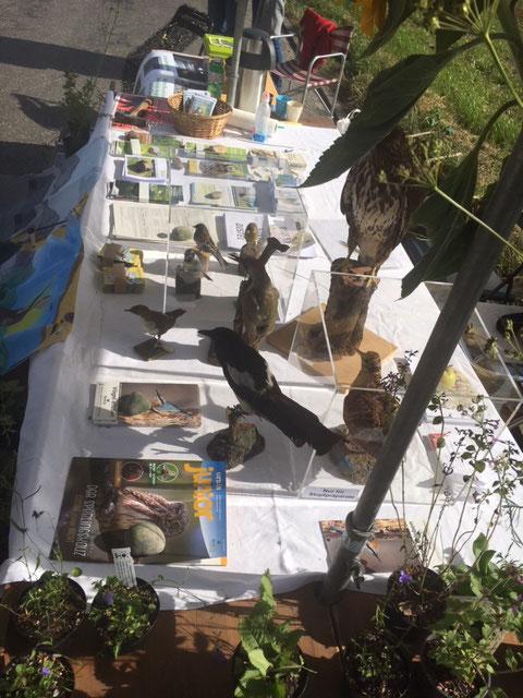 Mäusebussard, Elster und Grünspecht bewachen den Tisch und stellen die Artenkenntnisse der Besucher auf die Probe.
