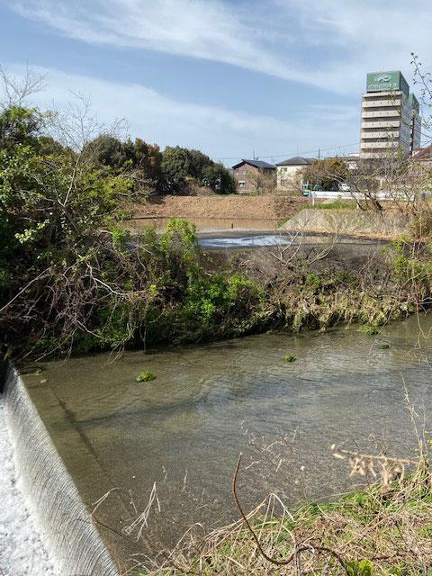元宮町公会堂の裏から中川越しに見た、雑木伐採後の柴田山遊水地。上流部の長雨や集中豪雨などによる増水時に本流の水を引き込んで遊ばせる構造がよく分かります。、