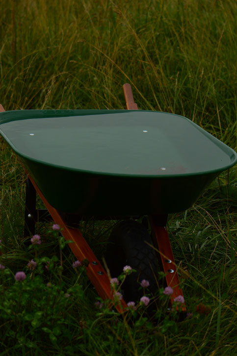 wheelbarrow full of rainwater