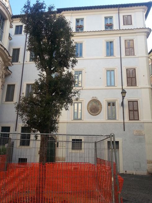 Mancava da qualche tempo ed è finalmente tornata al suo posto la quercia della piazzetta omonima, accanto a palazzo Spada. Donata dalla confraternita dei macellai, l'albero è ancora piccolino, ma crescerà...