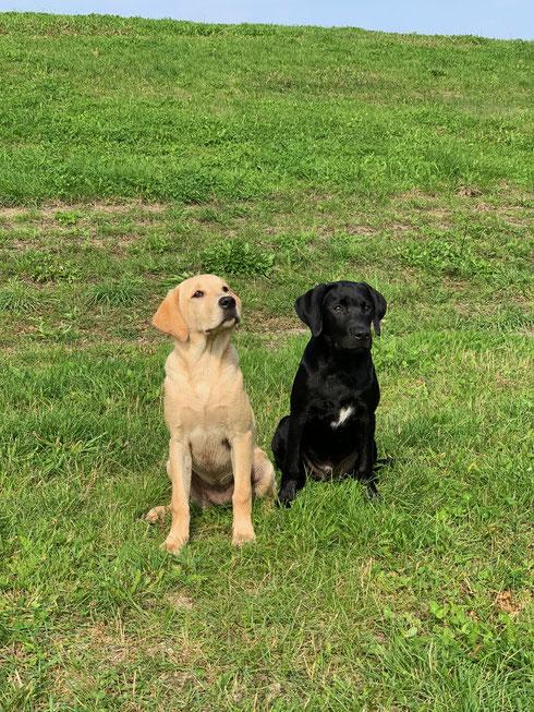 Foxy and first love Flake (beide 19 Wochen)
