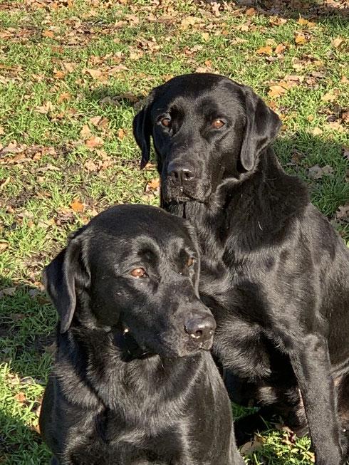 hinten: Hunter und vorne Sohn Clyde