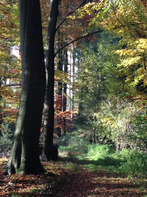 Naturtherapie Waldtherapie Visionssuche Waldtherapie Ausbildung