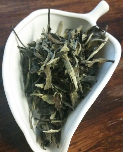 餐月 茶葉・・・葉も多いが一芯一葉、一芯二葉も多い、ややくすんだような色