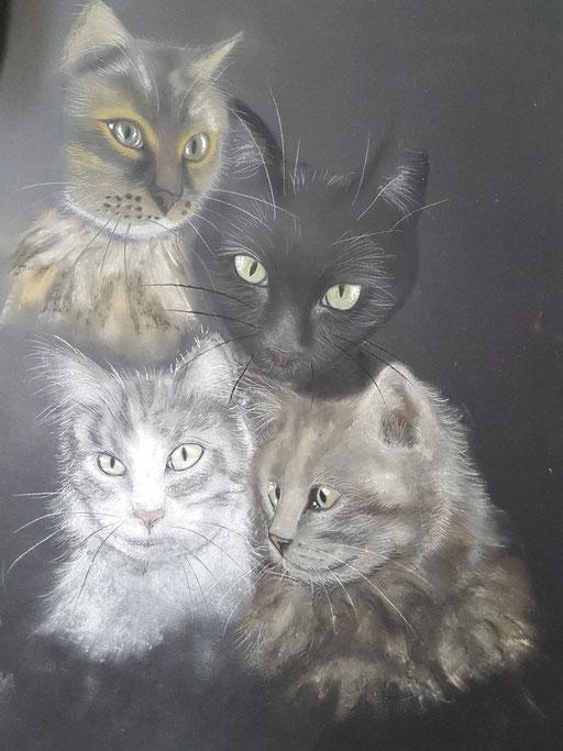 Bild: vier Katzen auf schwarzem Karton